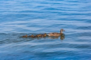 Going Wide - Getting your ducks in a row